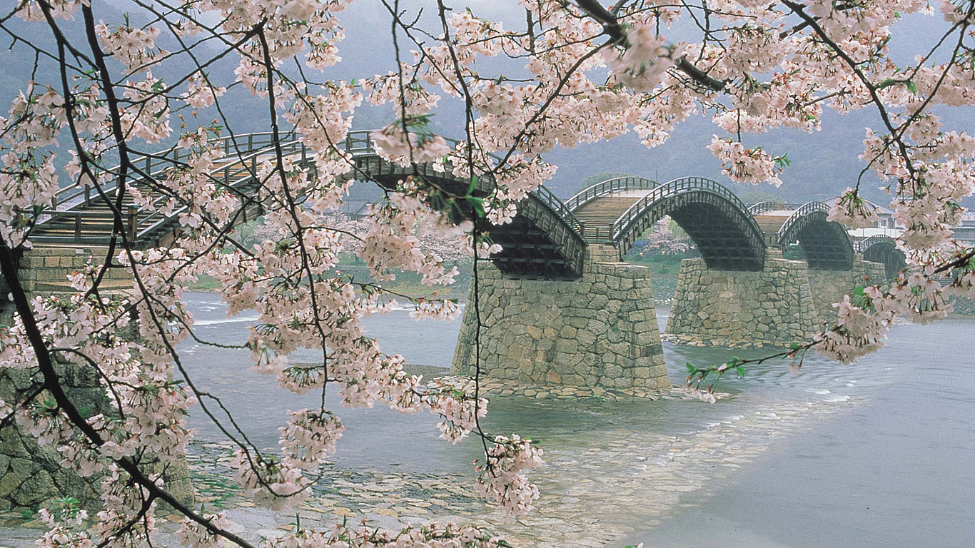 Ветки сакуры у моста Кинтай